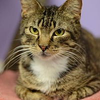 Adopt A Pet :: Lexington	170500 - Atlanta, GA