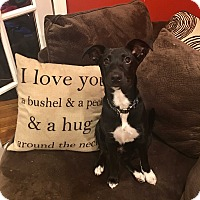 Adopt A Pet :: Peter - Baltimore, MD