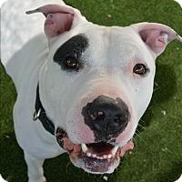 Adopt A Pet :: Knox - Meridian, ID