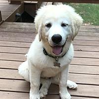 Adopt A Pet :: Apollo - Newnan, GA
