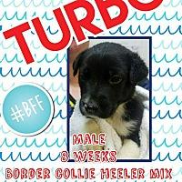 Adopt A Pet :: Turbo - Ogden, UT