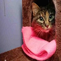 Adopt A Pet :: CYNTHIA - Canfield, OH