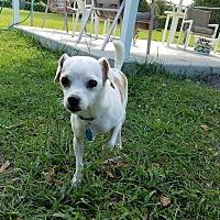 Adopt A Pet :: Leo - Umatilla, FL