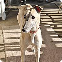 Adopt A Pet :: Avery - Philadelphia, PA