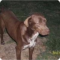 Adopt A Pet :: Daisy - Farmingtoon, MO