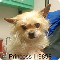 Adopt A Pet :: Princess II - Greencastle, NC