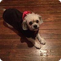 Adopt A Pet :: Buster Brown - New York, NY