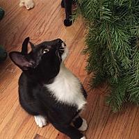 Adopt A Pet :: Callen - Sacramento, CA