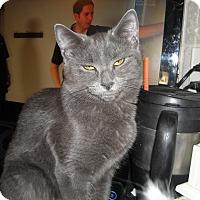 Adopt A Pet :: Samantha - Riverside, RI