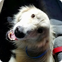 Adopt A Pet :: Dusty - Gainesville, FL