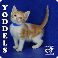 Adopt A Pet :: Yoddles - Carencro, LA