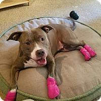 Adopt A Pet :: Elena, loves people - Sacramento, CA