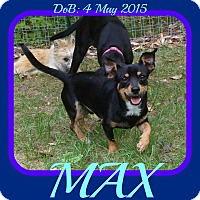 Adopt A Pet :: MAX - Jersey City, NJ