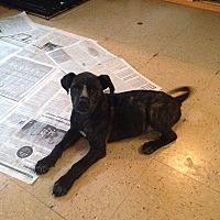 Adopt A Pet :: Jasmine - Marianna, FL