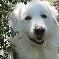 Adopt A Pet :: Dovey - Kiowa, OK