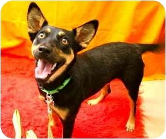 Shepherd (Unknown Type) Mix Dog for adoption in Portland, Oregon - Mackenzie