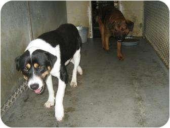 Hound (Unknown Type) Mix Dog for adoption in Henderson, North Carolina - Tucker