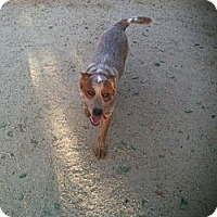 Adopt A Pet :: Belt - Phoenix, AZ