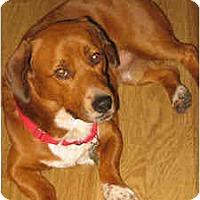 Adopt A Pet :: Yogi - Phoenix, AZ
