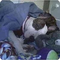 Adopt A Pet :: Princess Pollyanna - Westerville, OH