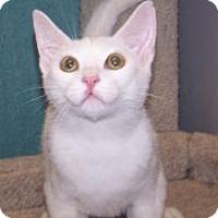 Adopt A Pet :: K-Emery2-Maxwell - Colorado Springs, CO