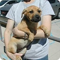 Adopt A Pet :: Velvet - Crawfordville, FL