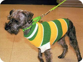 Miniature Schnauzer/Yorkie, Yorkshire Terrier Mix Dog for adoption in Sharonville, Ohio - Peaches