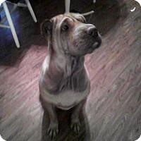 Adopt A Pet :: Gypsy - Houston, TX