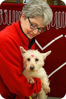 Westie, West Highland White Terrier Mix Dog for adoption in Homer, New York - Sassy-Frassy