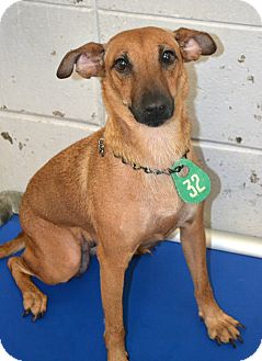Terrier (Unknown Type, Small) Mix Dog for adoption in Beaumont, Texas - Nora