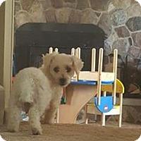 Adopt A Pet :: Cinderella - ROME, NY