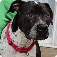 Adopt A Pet :: Gunner - St. Charles, MO