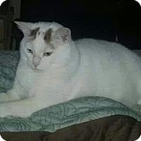 Adopt A Pet :: Archie - Wilmington, NC