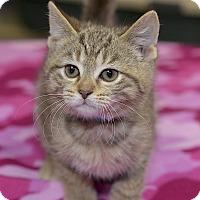 Adopt A Pet :: Sal - Medina, OH