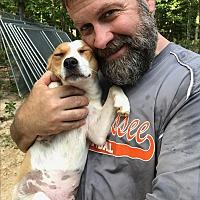 Adopt A Pet :: Quinn - Waynesboro, TN