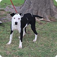 Adopt A Pet :: A32 Turner - Odessa, TX