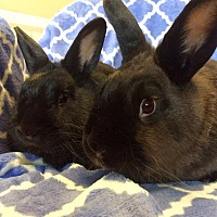 Other/Unknown Mix for adoption in Idaho Falls, Idaho - Barnaby and James