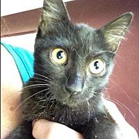 Adopt A Pet :: Hudson - Hallandale, FL