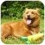 Photo 4 - Finnish Spitz/Corgi Mix Dog for adoption in Mocksville, North Carolina - Mindy