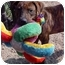 Photo 4 - Pit Bull Terrier Mix Dog for adoption in Huntington, New York - Kirby