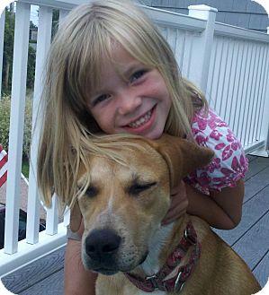 Labrador Retriever/Hound (Unknown Type) Mix Dog for adoption in Naugatuck, Connecticut - Jabba