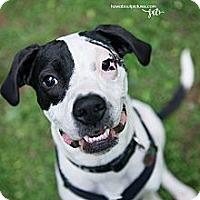 Adopt A Pet :: MacLovin - Atlanta, GA