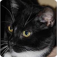 Adopt A Pet :: Billy Bob - Warminster, PA