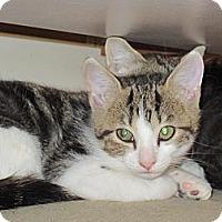 Adopt A Pet :: Blaze - Spotsylvania, VA