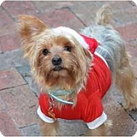 Adopt A Pet :: Logan - Fairfax, VA