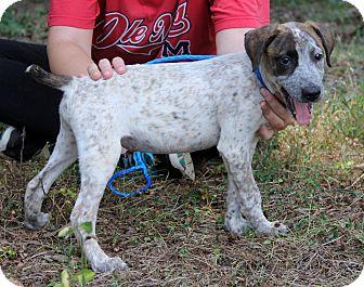 Australian Shepherd Mix Puppy for adoption in Minnetonka, Minnesota - OLIVIA