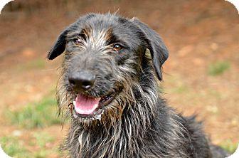 Terrier (Unknown Type, Medium) Mix Dog for adoption in Siler City, North Carolina - Cricket