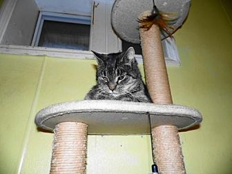Domestic Shorthair Cat for adoption in Frenchburg, Kentucky - Ethel