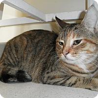 Adopt A Pet :: Sparrow - Milwaukee, WI