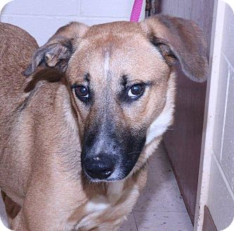 Shepherd (Unknown Type) Mix Dog for adoption in McDonough, Georgia - Kaplan